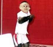 rally monkey.jpg